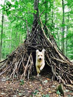 der Praxishund
