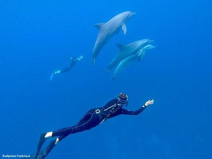 ocean bluex,ocean bx,fdhq, freediving,freedive,bx, freedive with dolphins,swimming with dolphins.jpg