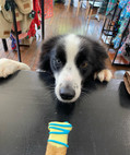 May I have another treat please ? at  Sandys Grooming Tails & K9 Cafe