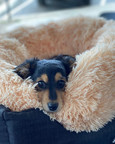 All snuggled up at  Sandys Grooming Tails & K9 Cafe
