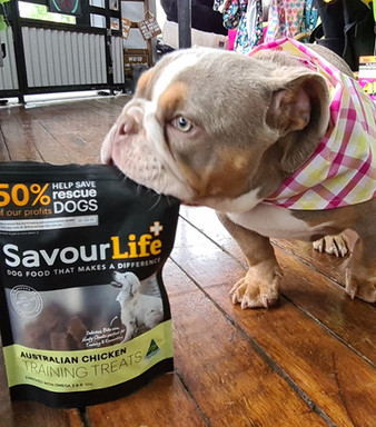 Stevie loves Savour Life treats at  Sandys Grooming Tails & K9 Cafe