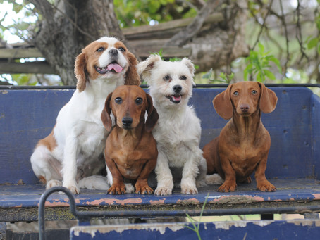 Critical Services Provided by Professional Pet Groomers