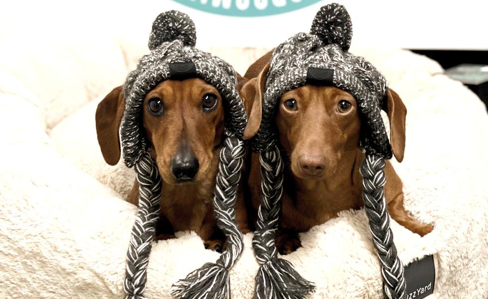 Sandys Grooming Tails & K9 Cafe Shop Dogs Milton & Delta