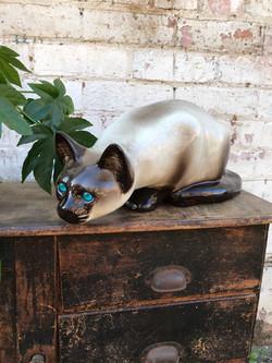 Siamese Cat - Jenny Winstanley