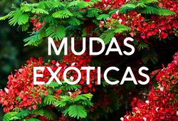 EXÓTICAS