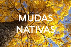 NATIVAS