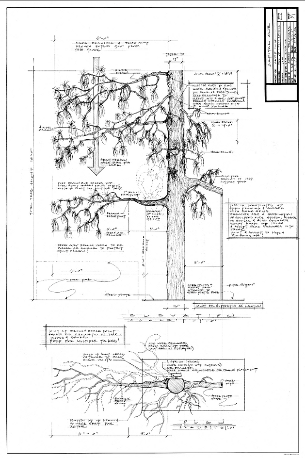 Capital One_Tree Drawing.png