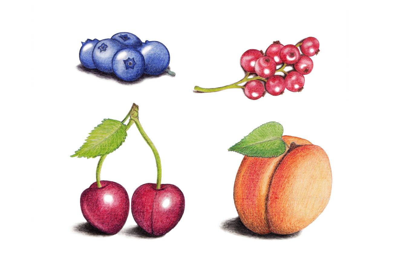 Früchte_Buntstift