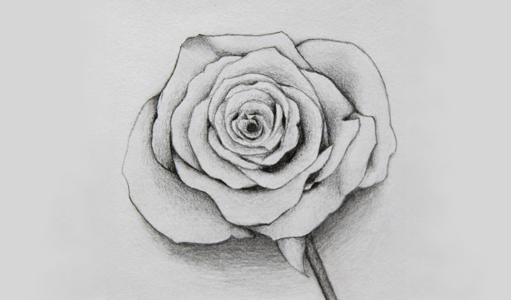 Rose Bleistift