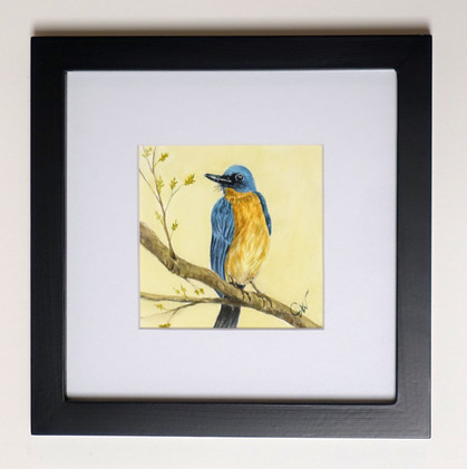 Bluebird Original Watercolor Mini_1