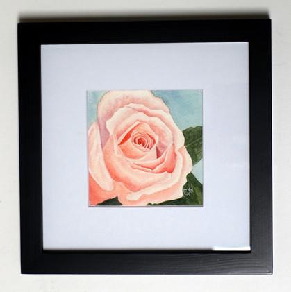 Pink Rose Original Watercolor Mini_1