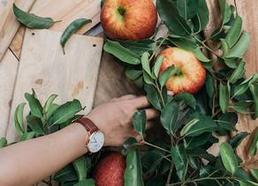 Ontario Apples