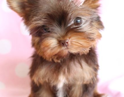 CARING FOR YOUR PUPPY`S GROOMING NEEDS
