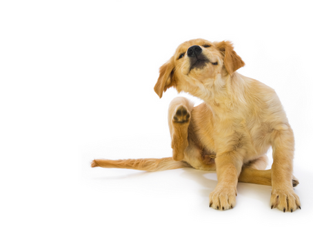 TIPS FOR KEEPING YOUR PET FLEA FREE