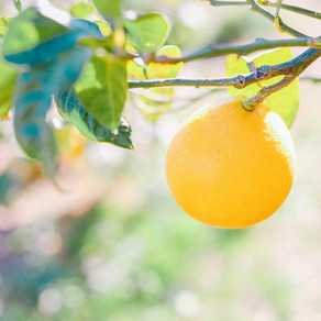 土佐ベルガモット栽培の本質