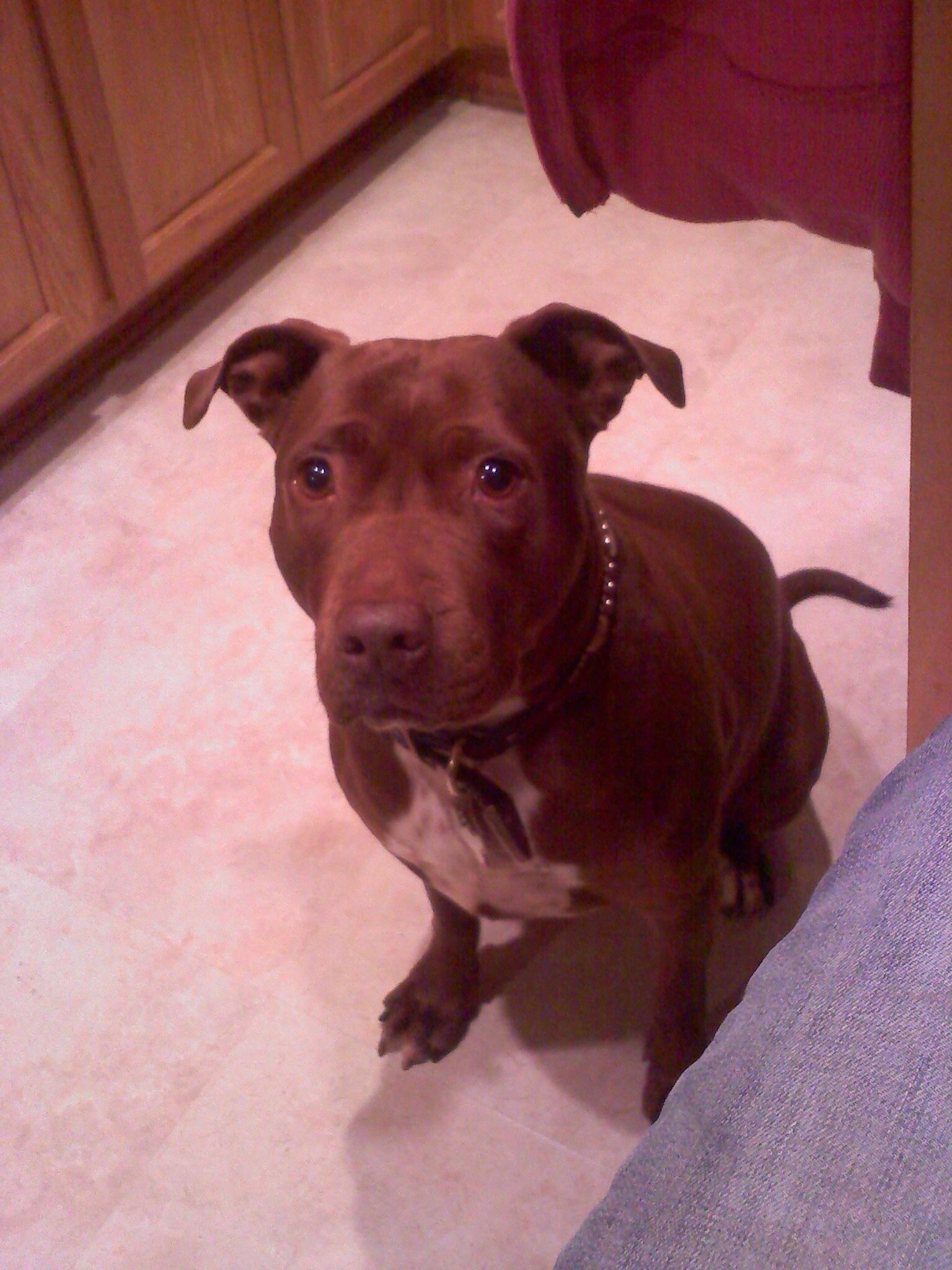 Olive begging face!