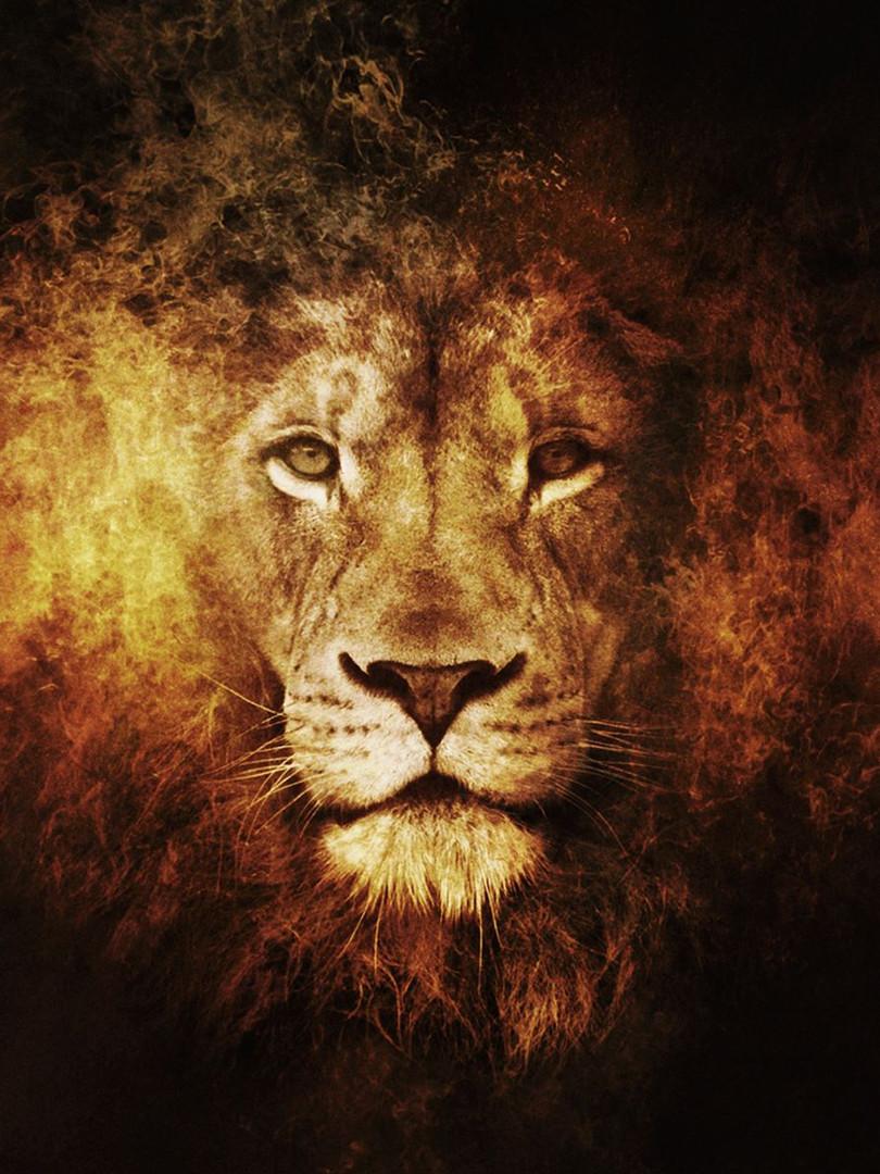 Lion Fire.jpg
