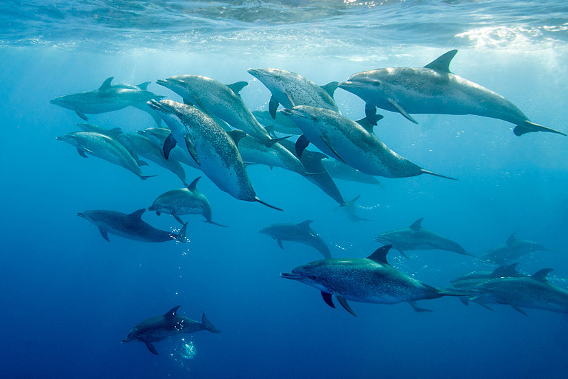 pod-dauphins-azores-18.jpg