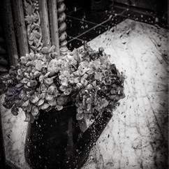 Fleurs en pot 1