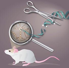 CRISPR fig -cedric.jpg