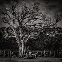 Osaka Tree 5