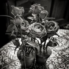 Fleurs Sèchées 1