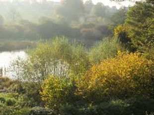 small brook meadows.jpg