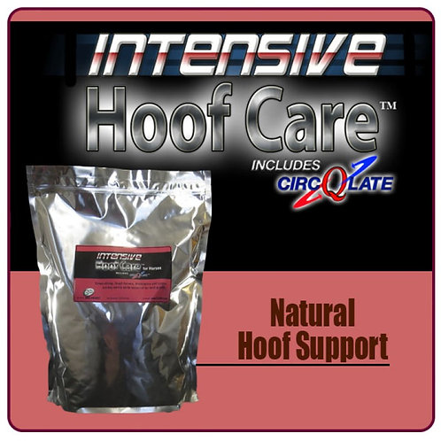 Intensive Hoof Care for Horses