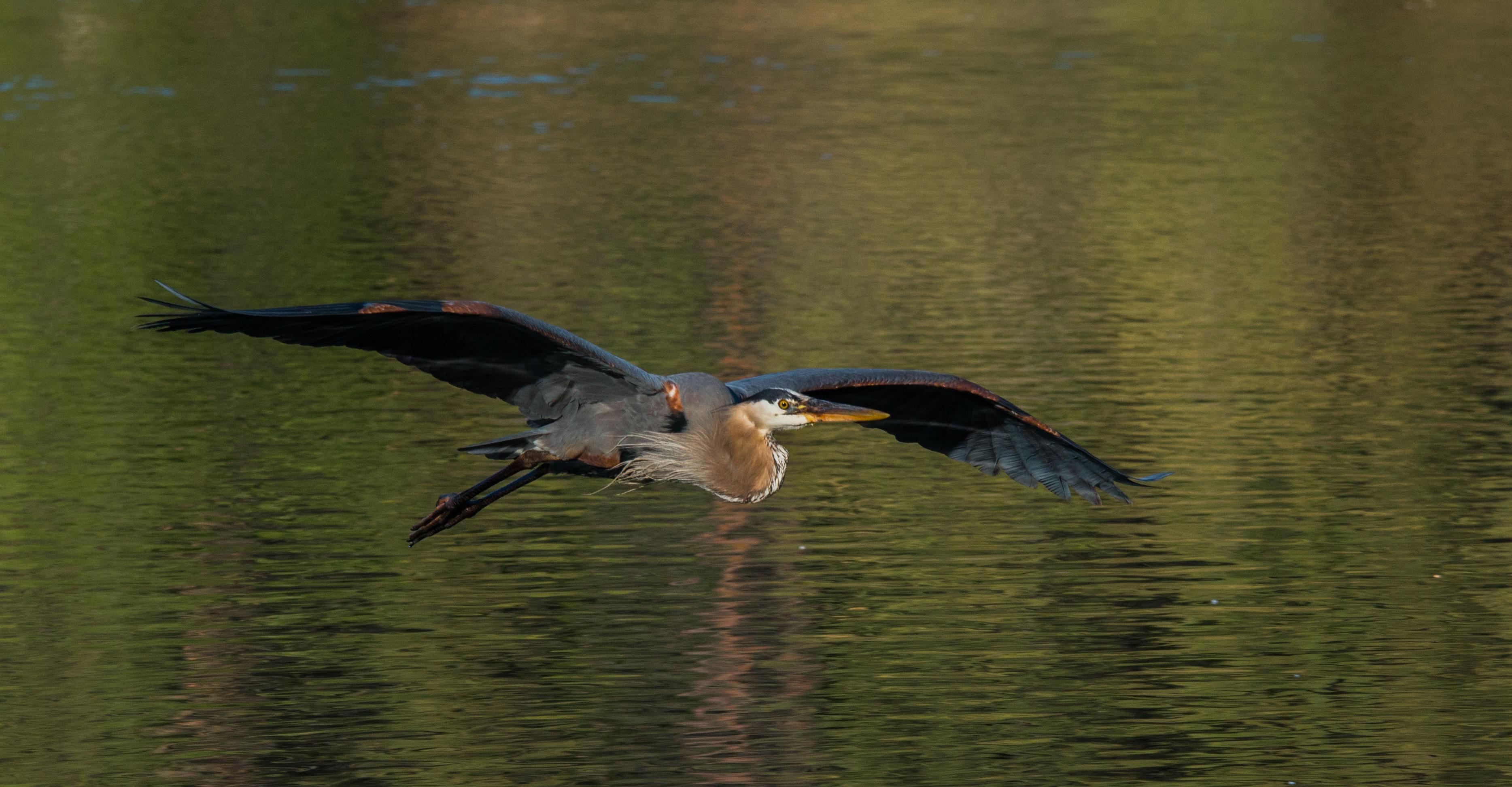 Marchettiphoto_Wildlife.jpg