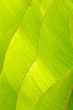 Marchettiphoto_Nature.jpg