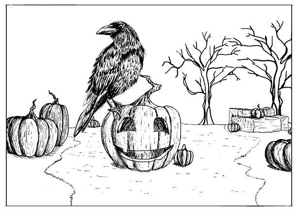 Pumpkin field.jpg