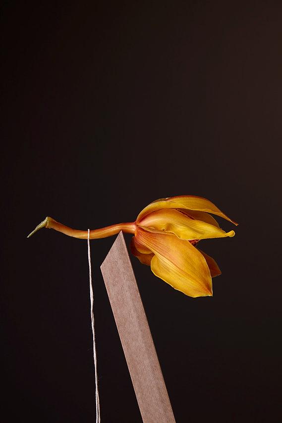 Kerstin Lakeberg, Stilllife, Stillleben, Stilllifephotographer, Fotograf, Berlin, Werbefotograf, Hamburg, Still-Fotograf, Werbung, ästhetisch, Flowers, Blumen, Fine Art, Orchidee