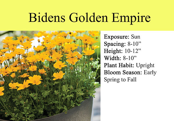 Bidens Golden Empire.jpg
