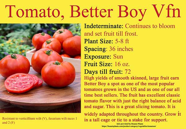 Tomato, Better Boy.jpg