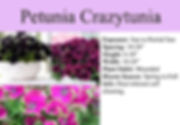 Petunia Crazytunia.jpg