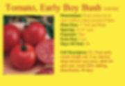 Tomato,Early Boy Bush.jpg