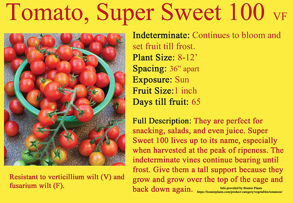 Tomato,Super Sweet 100.jpg