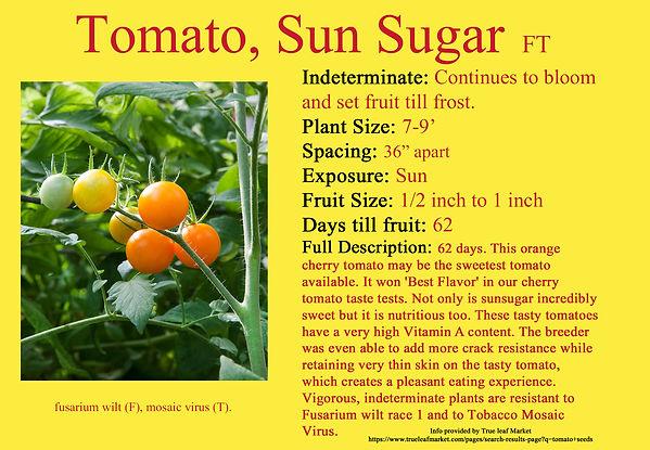 Tomato,Sun Sugar.jpg