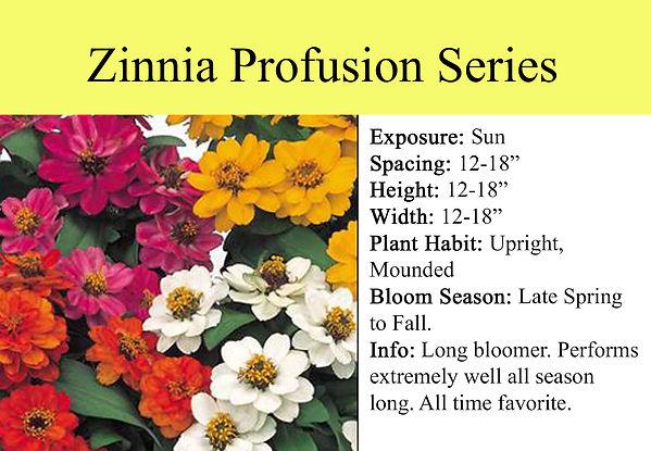 Zinnia Profusion Series.jpg