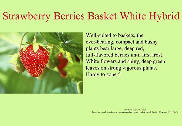 Strawberry Berries Basket White Hybrid.j