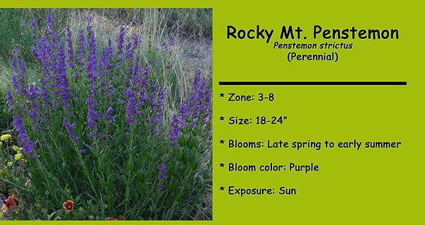 Penstemon Rocky Mt psd.jpg