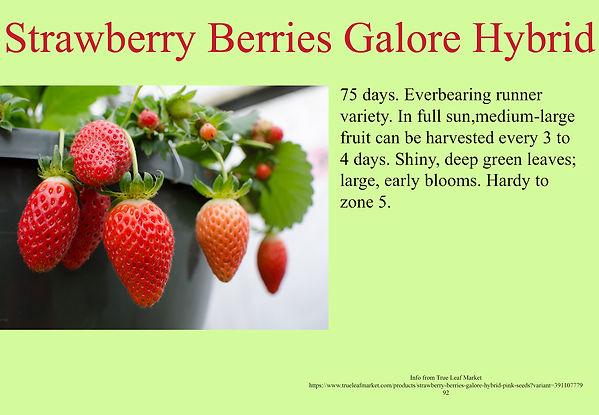 Strawberry Berries Galore Hybrid Pink.jp