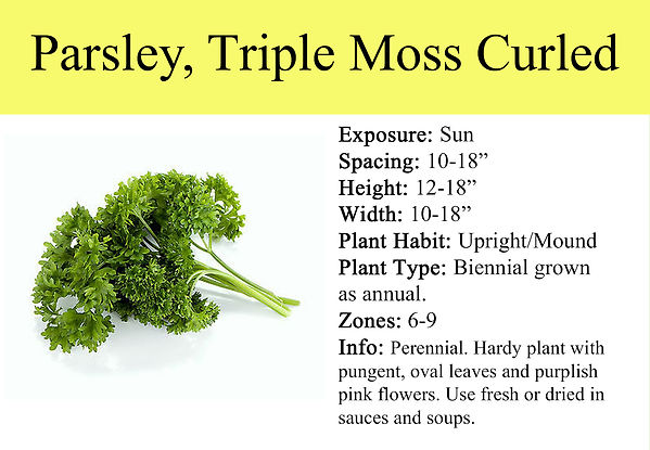 Parsley, Triple Moss Curled.jpg
