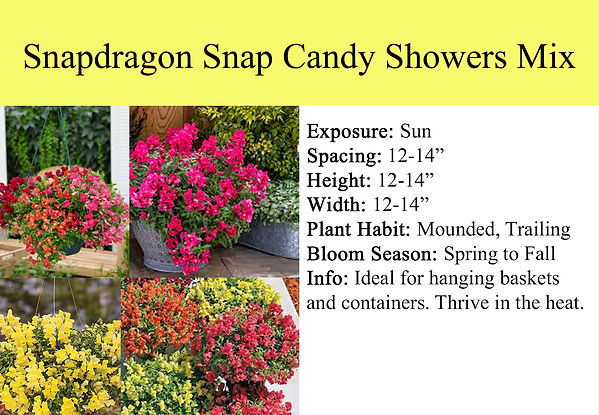 Snapdragon Snap Candy Showers Mix.jpg