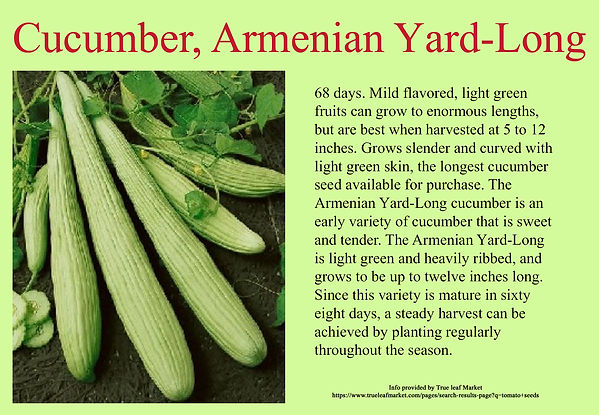 Cucumber, Armenian Yard-Long.jpg