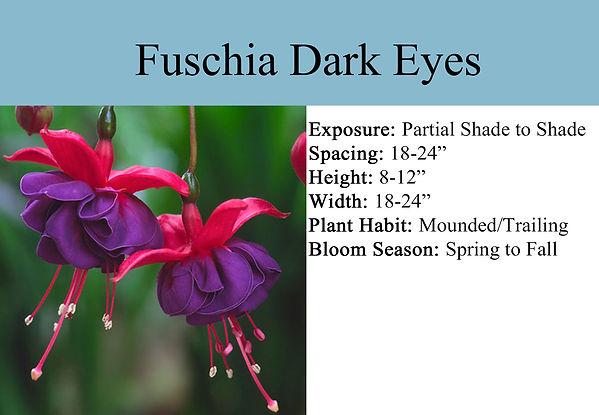 Fuschia Dark Eyes.jpg