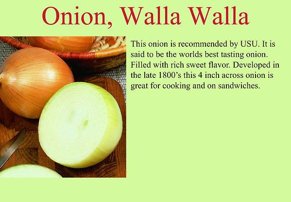 Onion Walla Walla.jpg