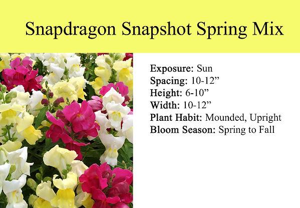 Snapdragon Snapshot Spring Mix.jpg