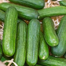 Cucumber Muncher.jpg