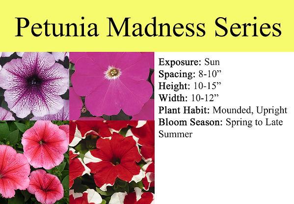 Petunia Madness.jpg